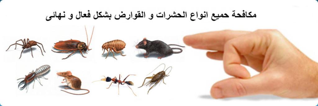 مكافحة حشرات بتبوك