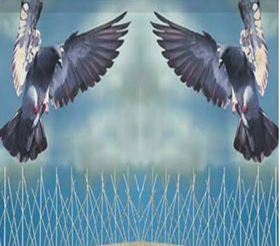 شركة مكافحة الحمام بالرياض 0550376120 شبك طارد و مانع الحمام – زهرة الخليج